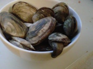 bowl of steamed clams
